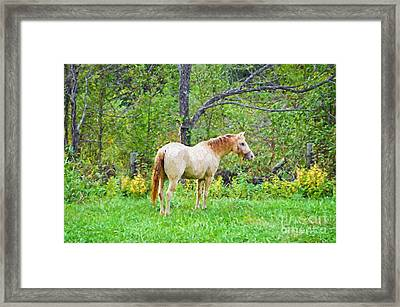 My Horse Cody - Digital Paint Framed Print by Debbie Portwood