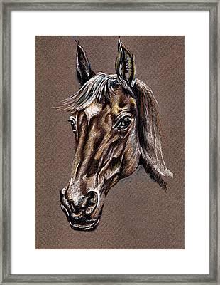 My Horse Portrait Framed Print by Daliana Pacuraru