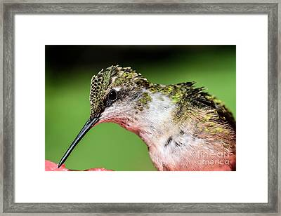 My Hummingbird Framed Print by Debbie Green