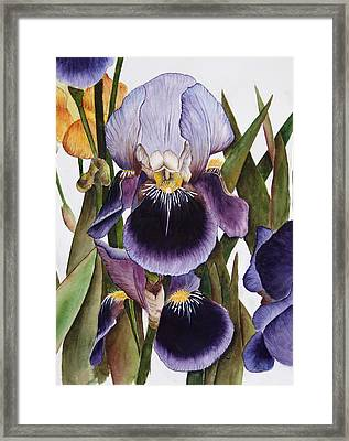 My Iris Garden Framed Print by Mary Gaines