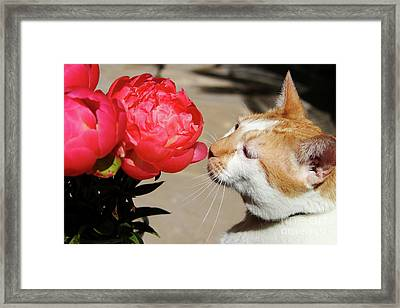 My Kitty In Love With A Peony Framed Print by Mariola Bitner