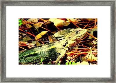 My Little Friend Framed Print by Louis Meyer