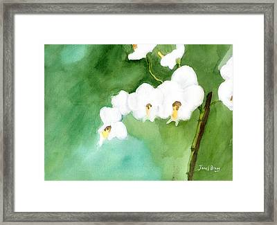 My Little Orchid In Green Framed Print