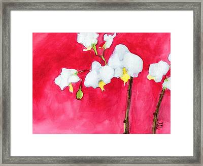 My Little Orchid Framed Print