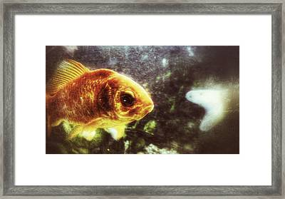 Framed Print featuring the photograph My Littlest Fish by Isabella F Abbie Shores FRSA