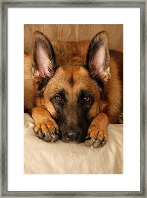 My Loyal Friend Framed Print