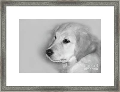 My Mission Is Love Framed Print by Cathy  Beharriell