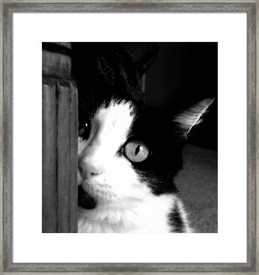 My Moo Framed Print by Holly Ethan