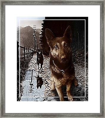 My Name Is Lux  Framed Print by Hartmut Jager