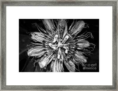 My Passionflower - Black And White Framed Print by Willow Perkinson
