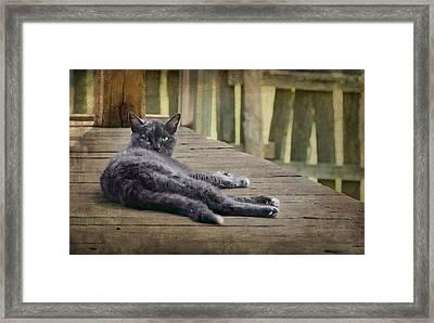 My Porch - Cat Framed Print by Nikolyn McDonald