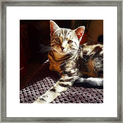 My Pretty Kitty #stiles Enjoying The Framed Print by Dante Harker