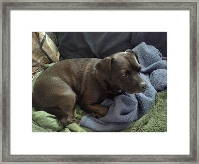 My Puppy Bella Framed Print by Jewel Hengen