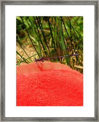 My Purple Friend Framed Print by Menucha Citron