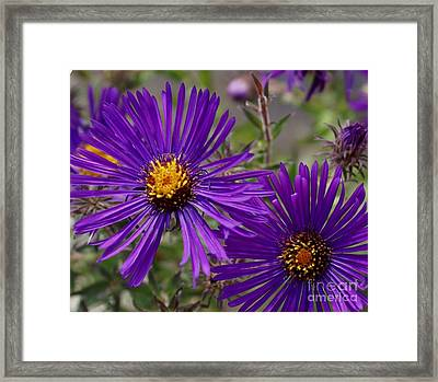 My Purple Ways Framed Print by Debbie May