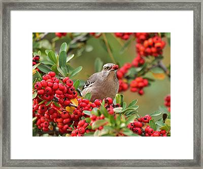 My Red Berry Framed Print