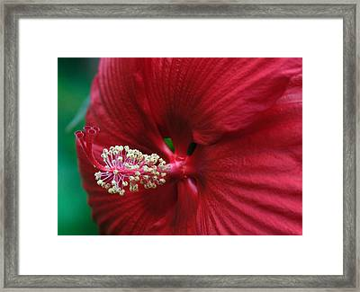 My Red Flower Framed Print by Charlie Hunt