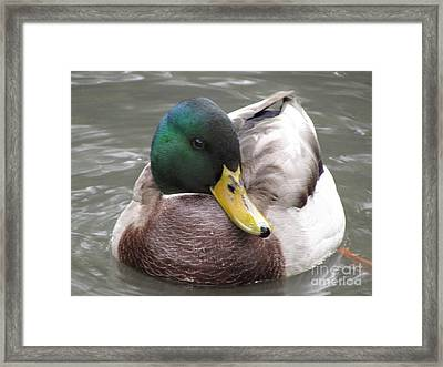 My Right Side Is My Best Side Framed Print
