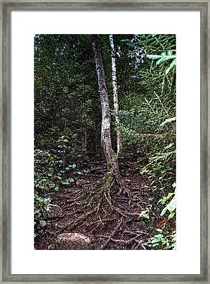 My Roots Framed Print by Ross Powell