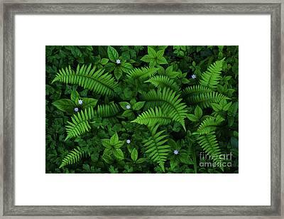 My Secret Garden Framed Print