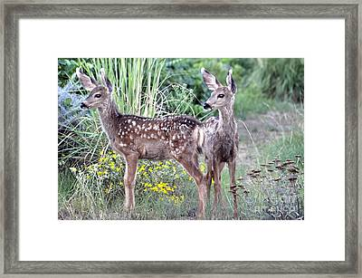Me And My Shadow  Framed Print by Juls Adams