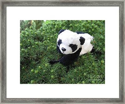 Framed Print featuring the photograph My Soft Green Bed by Ausra Huntington nee Paulauskaite