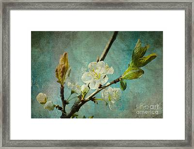 My Springtime Framed Print by Angela Doelling AD DESIGN Photo and PhotoArt