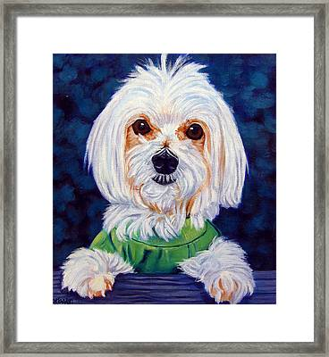 My Sweater - Maltese Dog Framed Print by Lyn Cook