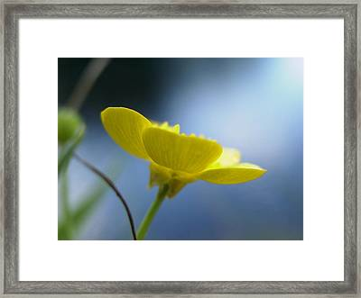 Framed Print featuring the painting My Sweet Buttercup by Martha Ayotte