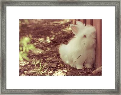 My Sweet Little Cutie Framed Print