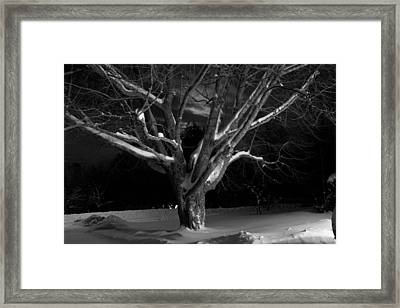 Framed Print featuring the photograph My Tree by Greg DeBeck