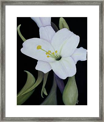 My White Lily Framed Print by Mary Gaines