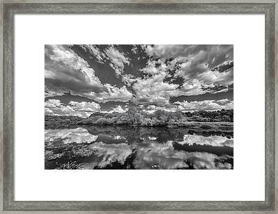 Myakka Dream Framed Print