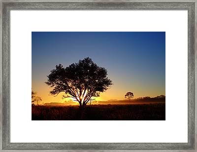 Myakka Sunrise Framed Print