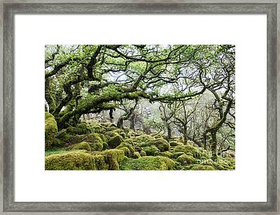 Mysterious Ancient Woodland Framed Print by Tim Gainey