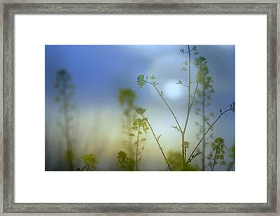 Mysterious Forest At Dusk Blue Framed Print by Guido Montanes Castillo