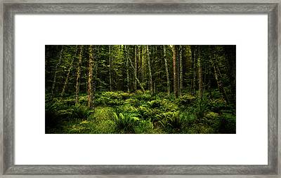 Mysterious Forest Framed Print by TL Mair