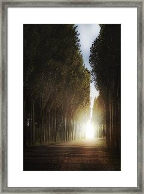 Mysterious Light Framed Print by Joana Kruse