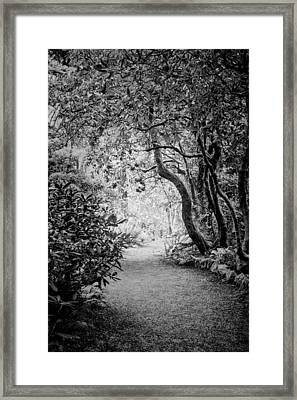 Mysterious Pathway Framed Print
