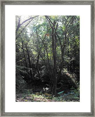 Mystery Framed Print by Eva Thomas