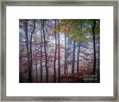 Mystery In Fog Framed Print
