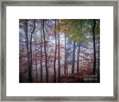 Mystery In Fog Framed Print