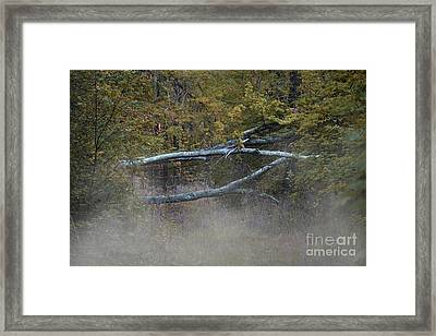 Framed Print featuring the photograph Mystery In The Fall by Skip Willits
