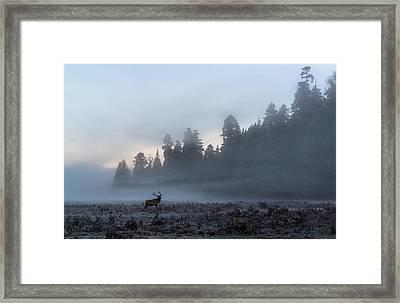 Mystic Elk Framed Print