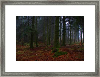 Mystic Forest Framed Print by Paulo Antunes