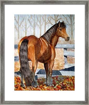 Mystic In Her Paddock Framed Print by Cheryl Dodd