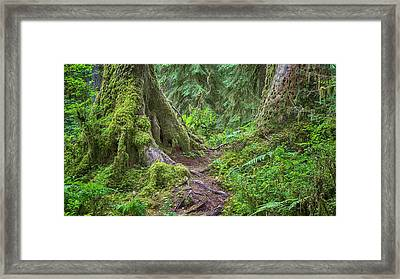 Mystic Journey - Hoh Rain Forest Framed Print