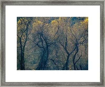 Mystic Trees Framed Print