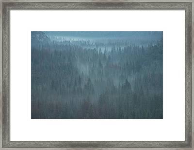Mystical Forest Framed Print