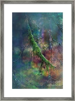 Mystical Moss - Series 1/2 Framed Print by Agnieszka Mlicka